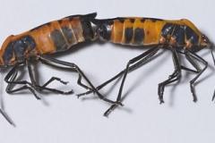 onc_specimen139